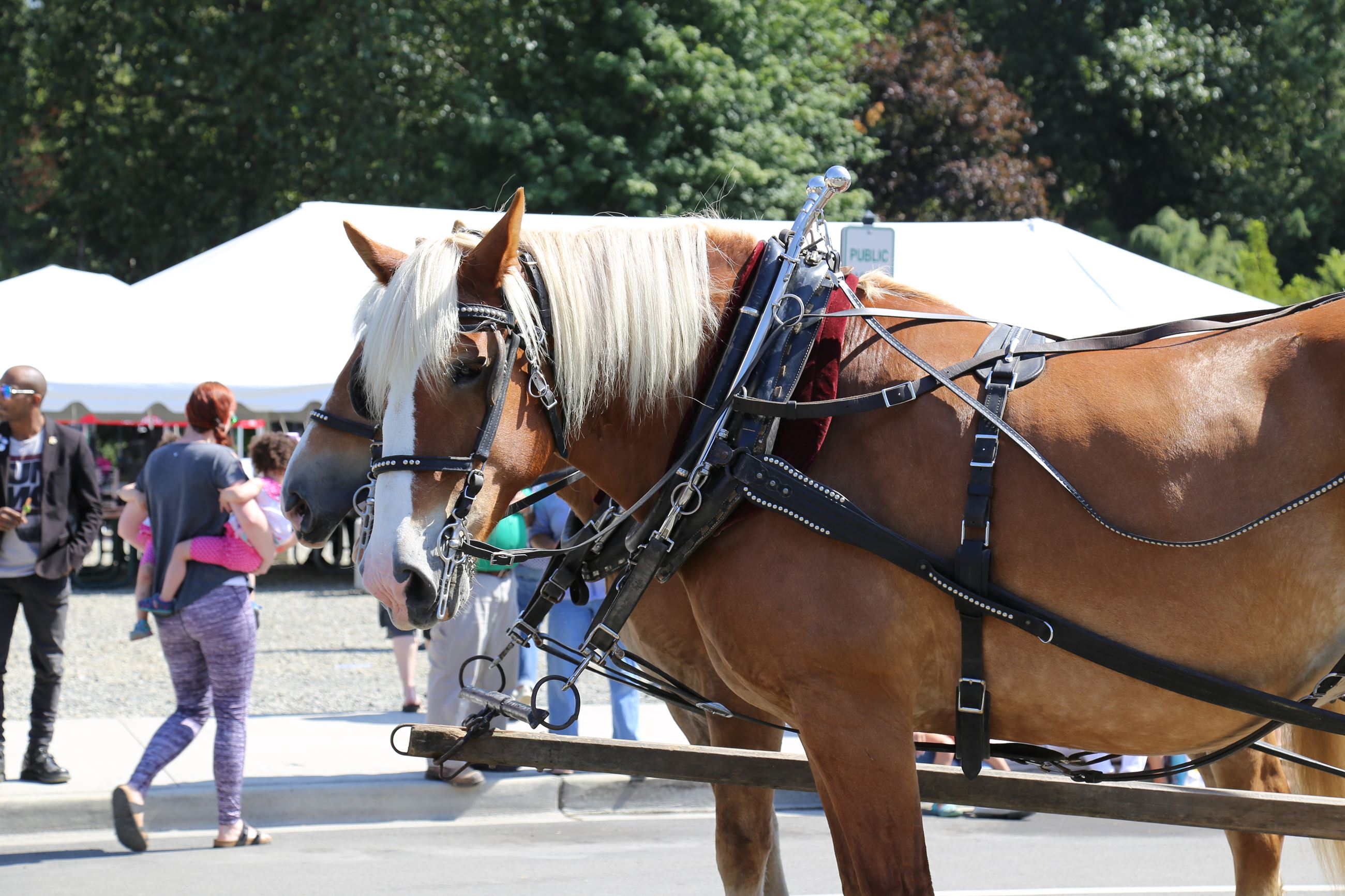 Horses from the Carmichaels Float